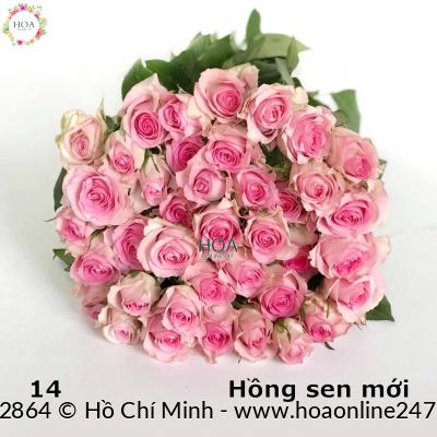 HOA LẺ: 60 hoa hồng Đà Lạt