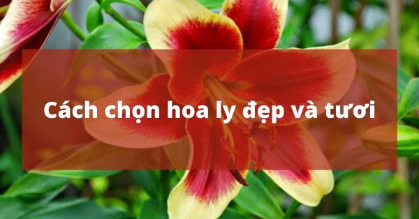 Bật mí cách chọn hoa ly đẹp và tươi