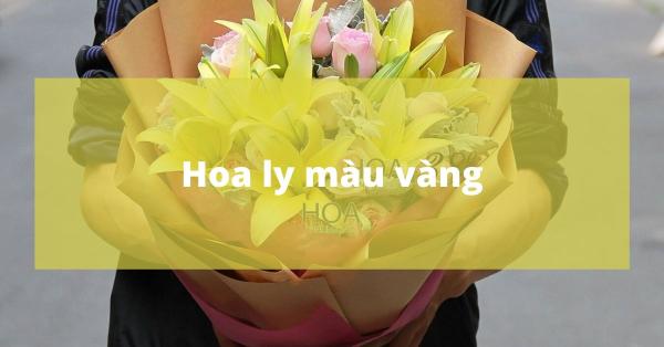 Hoa ly màu vàng   Sức mạnh và hào hoa