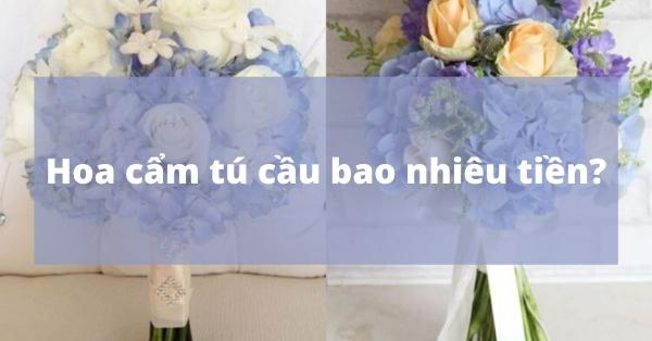 Giá hoa cẩm tú cầu bao nhiêu tiền?