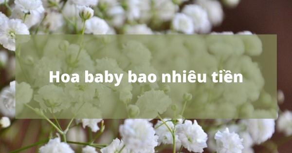 Giá hoa baby bao nhiêu tiền?
