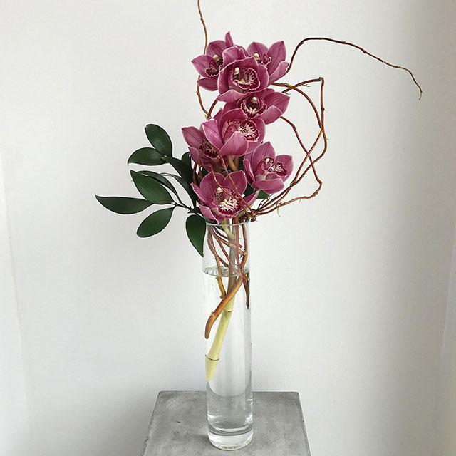 Cách giữ hoa lan tươi lâu - Ảnh 2