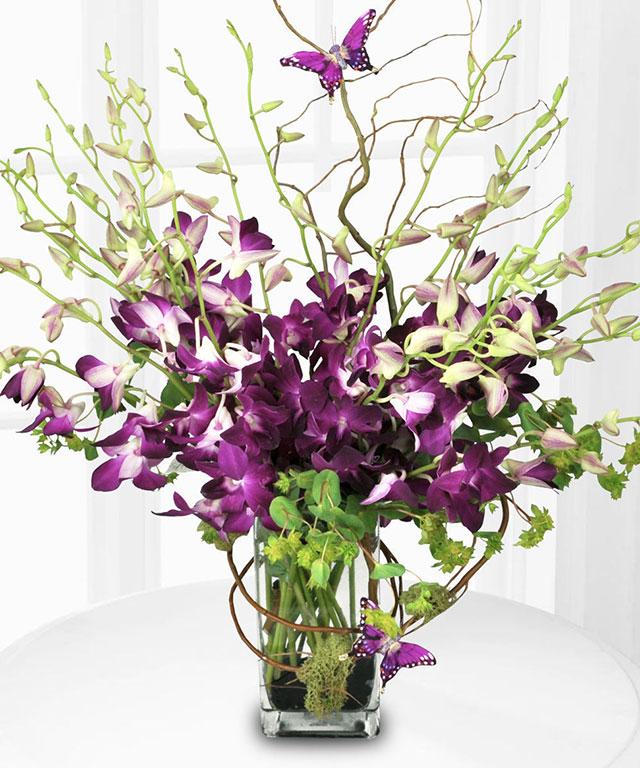 Cách giữ hoa lan tươi lâu - ảnh 4