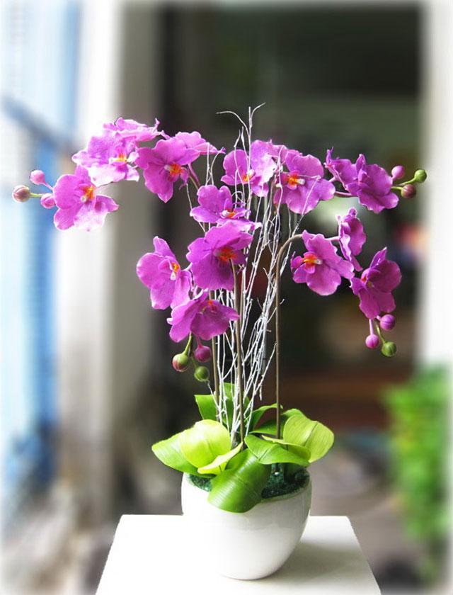 Cách giữ hoa lan tươi lâu - Ảnh 5