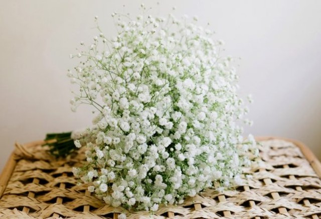Hoa baby bao nhiêu tiền - Hình 1