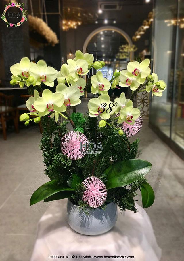 Hoa lan đẹp tặng sinh nhật - Tổng hợp thiết kế 2020 - hoaonline247.com